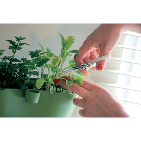 Nůžky na bylinky Herbs cut